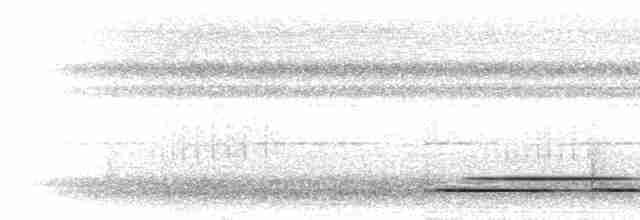 Great Tinamou - Peter Boesman