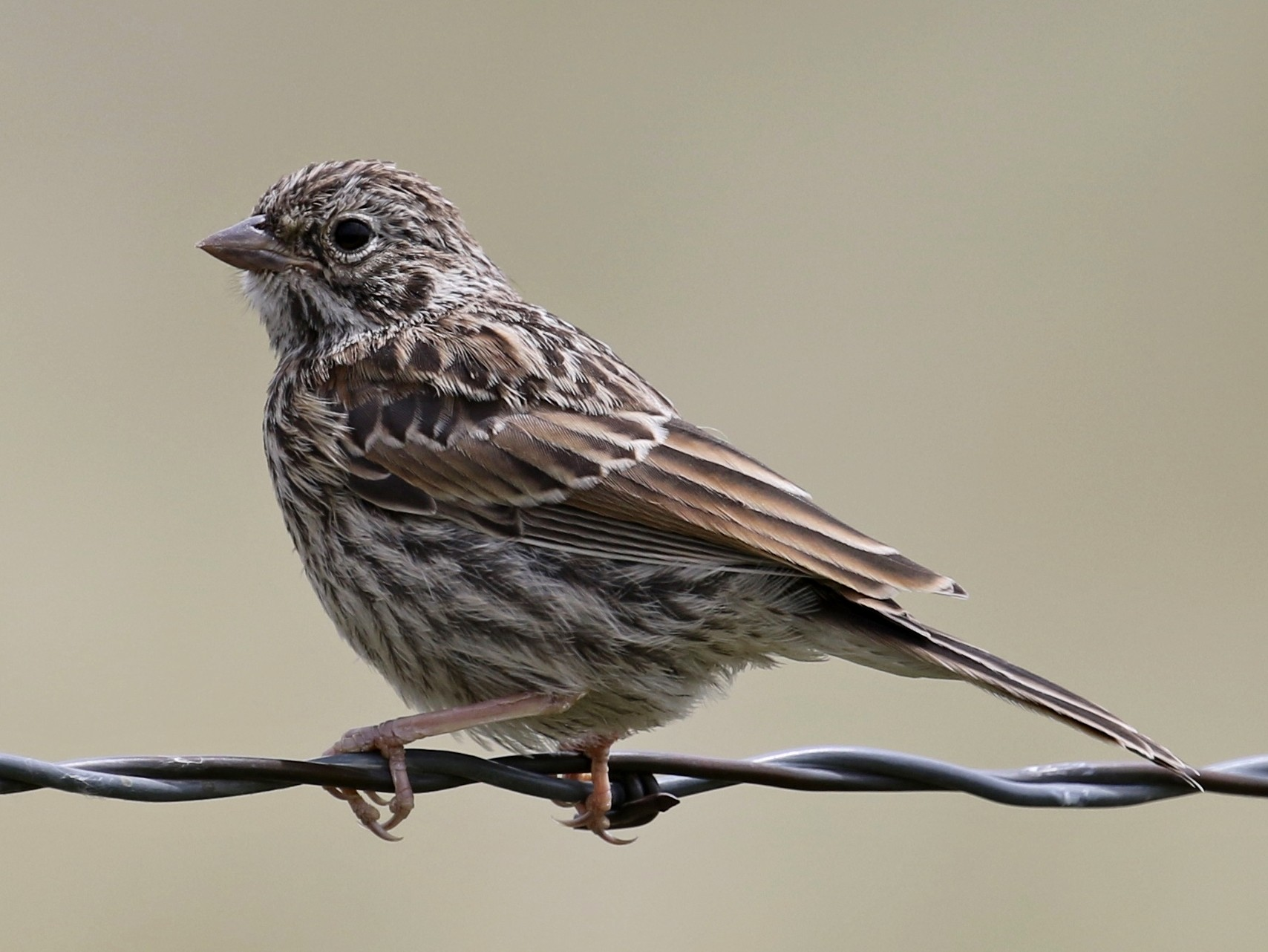 Vesper Sparrow - Russ Morgan