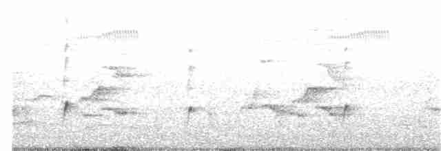 Wandering Whistling-Duck - Nicholas Talbot