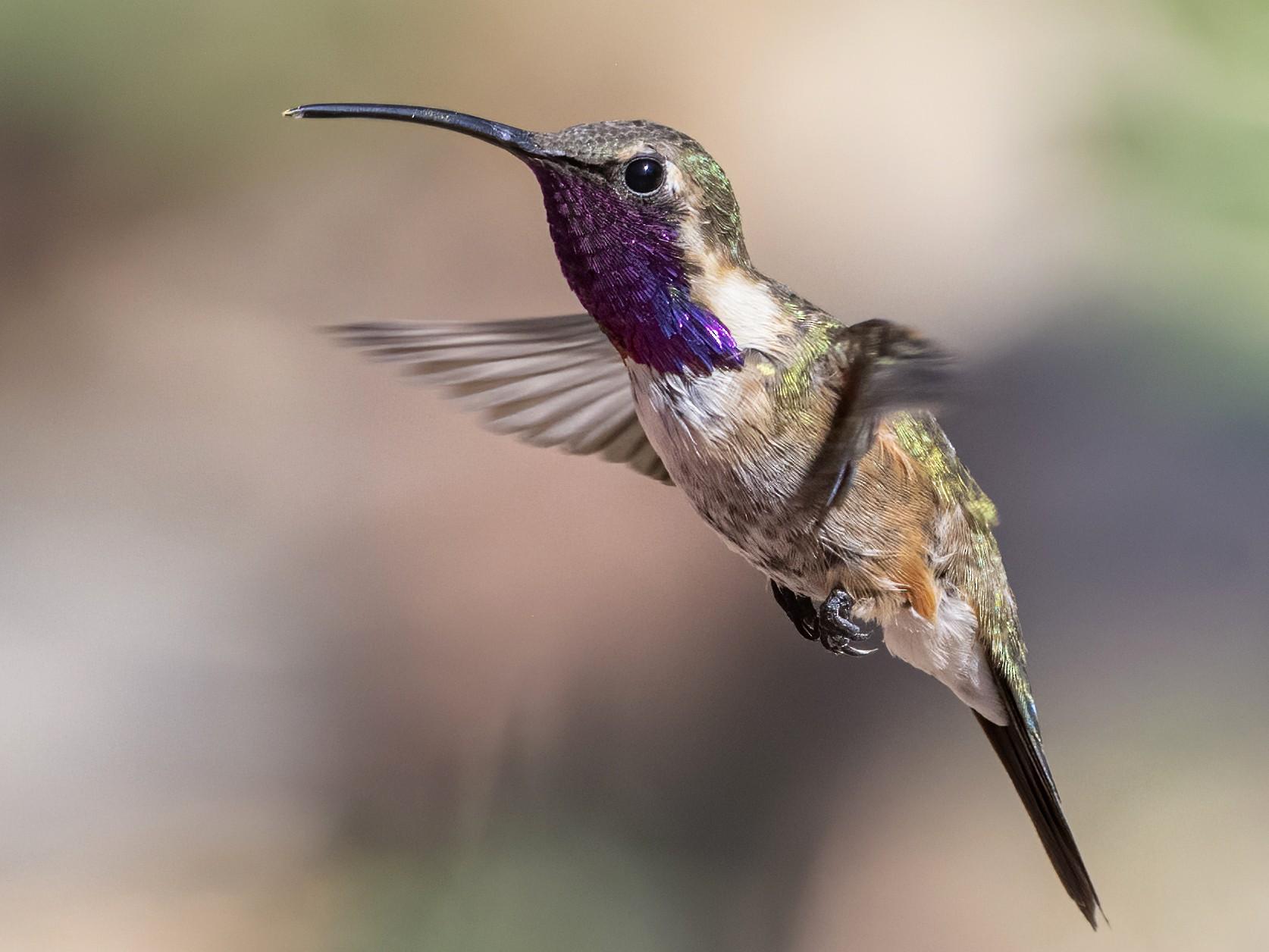 Lucifer Hummingbird - Bryan Calk