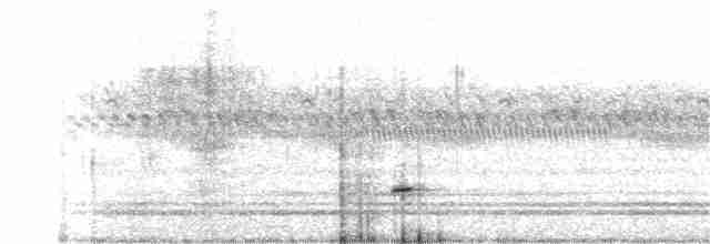 Small-billed Tinamou - Iván Eroles