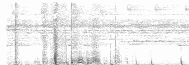 Cinereous Tinamou - Peter Kavouras