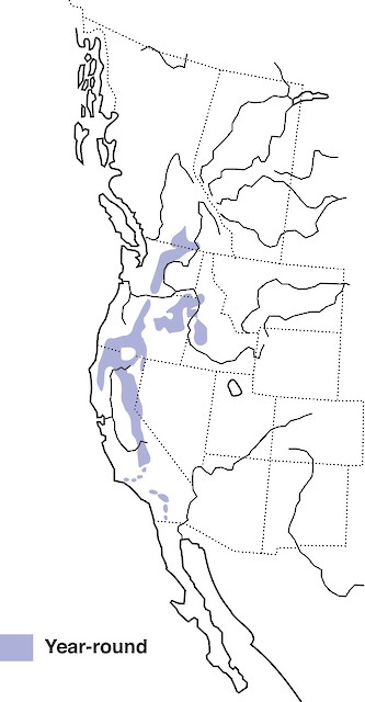 White-headed Woodpecker distribution.