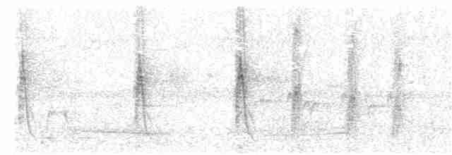 Plumed Whistling-Duck - Jack Morgan