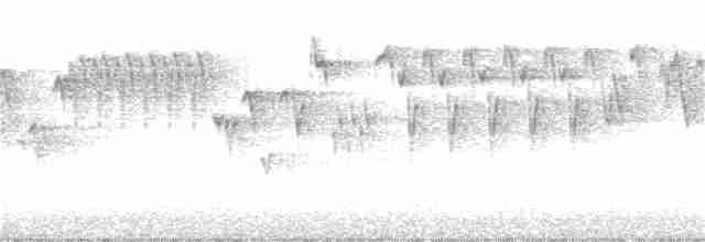 Pacific Wren
