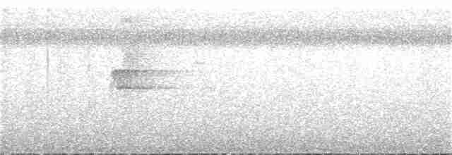 Micronesian Scrubfowl - Paul Radley