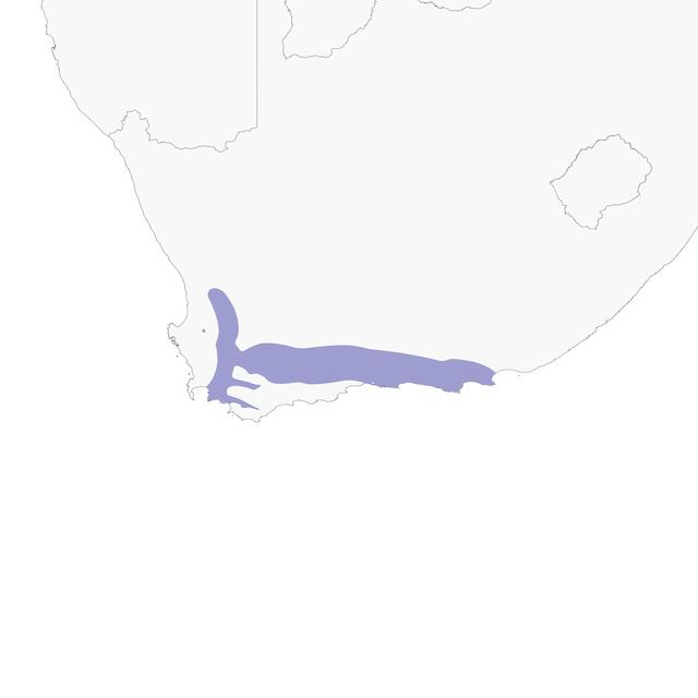 Distribution of the Cape Rockjumber