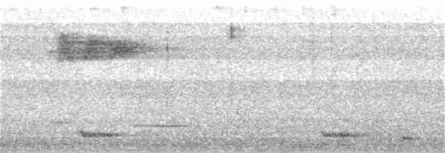 Malabar Whistling-Thrush