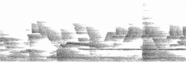 Common Iora