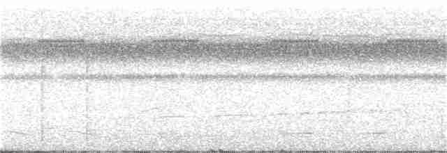 Undulated Tinamou - Gary Rosenberg