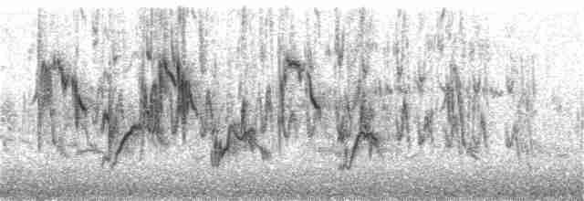 Pied x Black-eared Wheatear (hybrid)