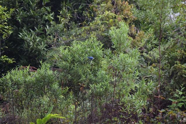 Example of Blue Vanga habitat in Madagascar.