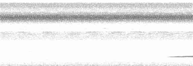 Thicket Tinamou - Peter Kaestner