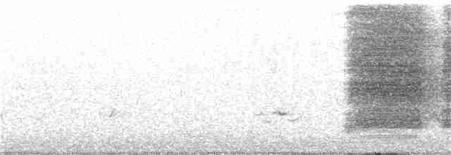 Steller's Jay (Coastal)