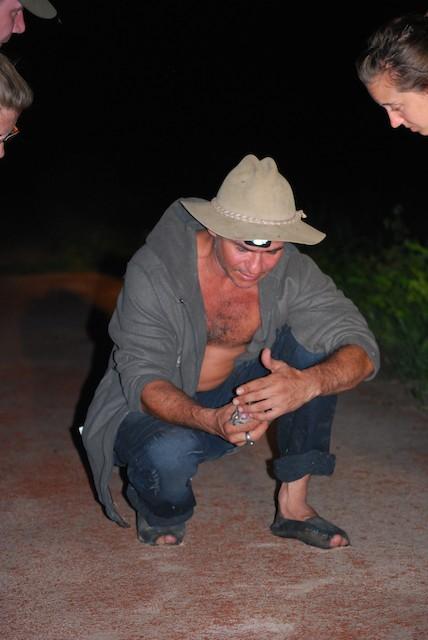 Todd's Nightjar