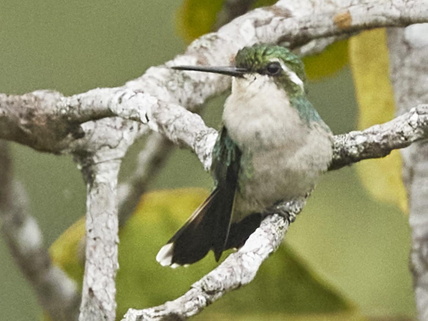 Chiribiquete Emerald - José Castaño