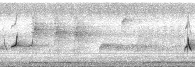Chestnut-bellied Partridge - Arnoud van den Berg
