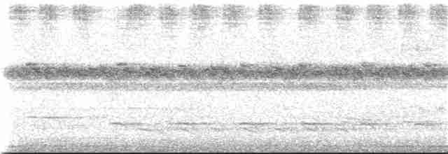 Solitary Tinamou - Martjan Lammertink