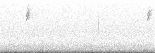 warbler sp. (Parulidae sp.)