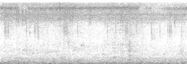 Spotted Dove - John Clough