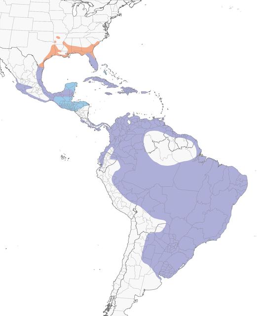 Distribution of the Purple Gallinule