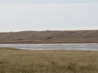 Tundra Swan, ML40563301