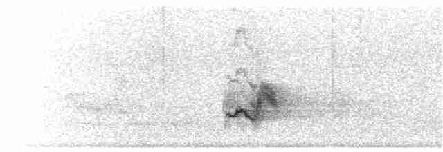 Vewy (probable juvenile)