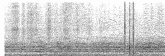 Cackling Goose (Richardson's) - Nick Komar