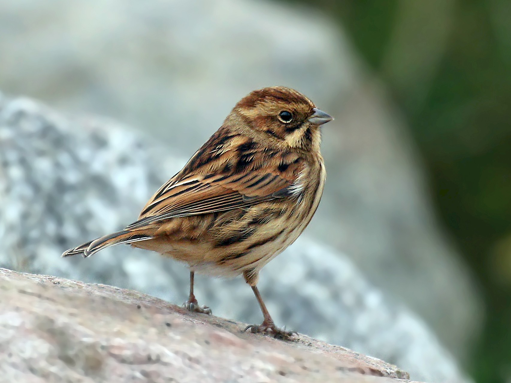Reed Bunting - Ryan Schain