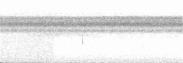 Little Tinamou - John van Dort