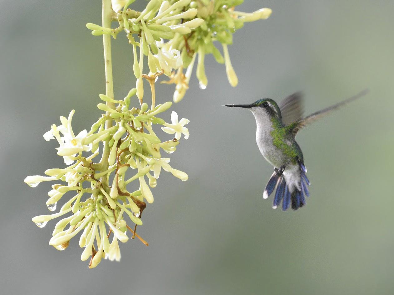Garden Emerald - KETIL KNUDSEN