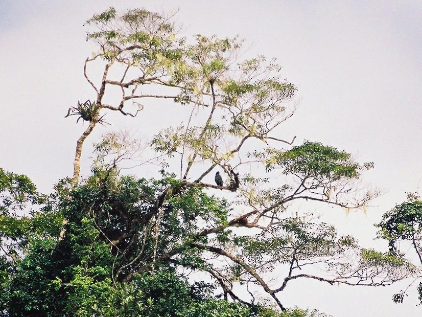 Solitary Eagle - Daniel Lebbin