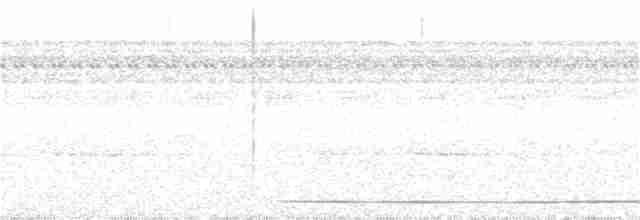 Slaty-breasted Tinamou - John van Dort