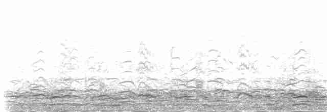 Snow Goose - Jay McGowan