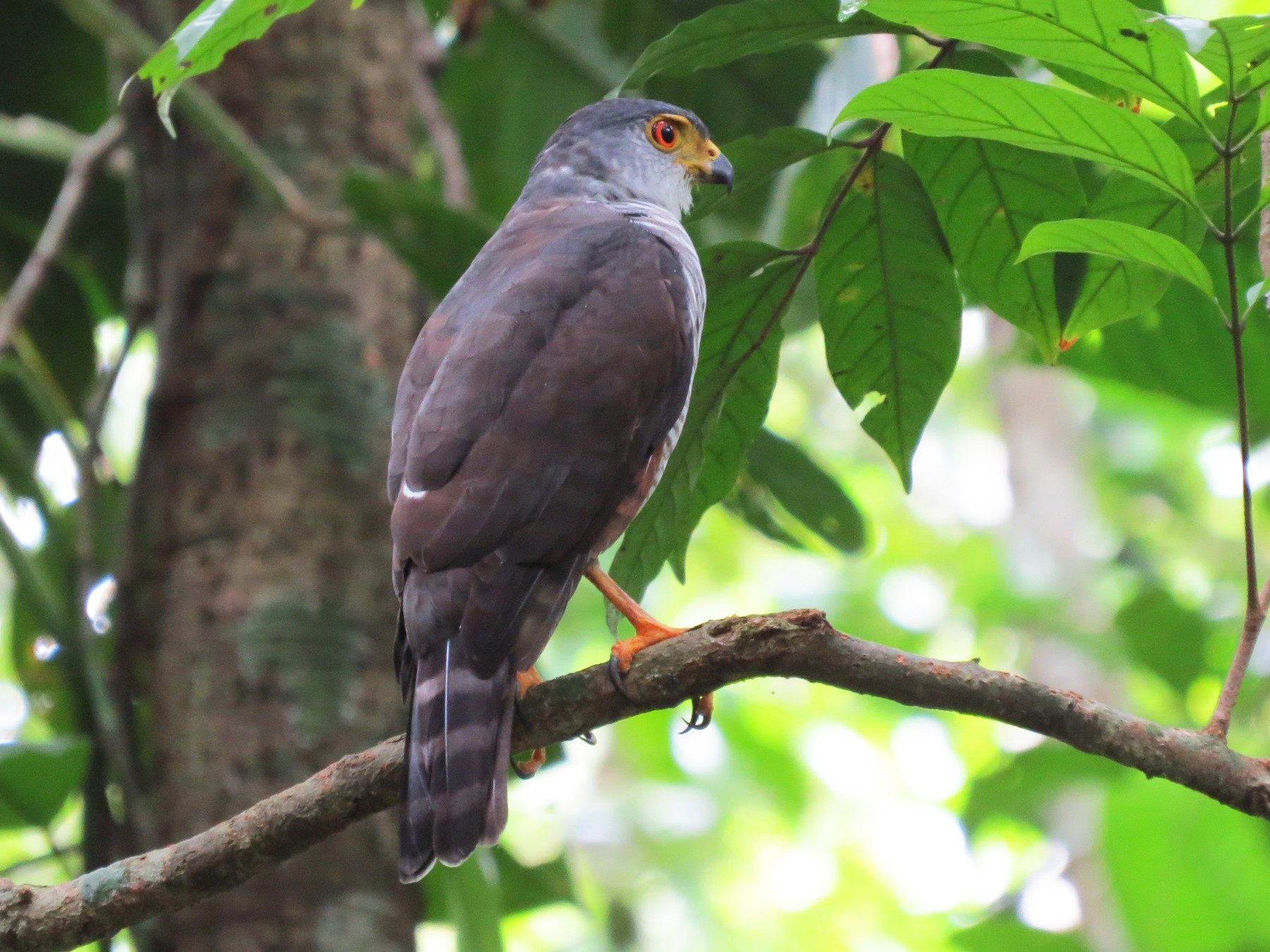 Tiny Hawk - Mariló C. Castro