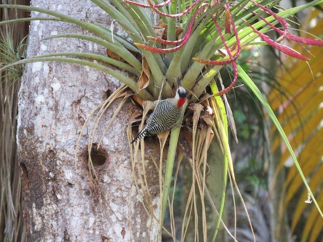 Foraging in epiphyte.