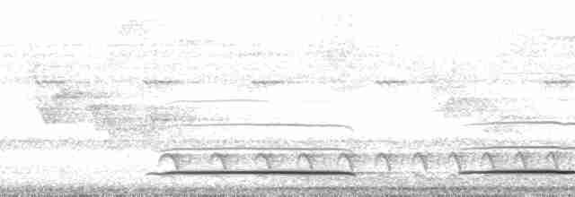 Great Tinamou - David L. Ross, Jr.