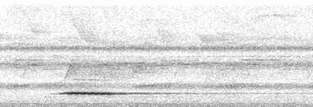 Gray Tinamou - Paul A. Schwartz