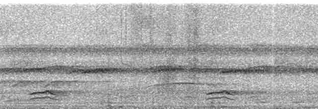 Highland Tinamou (South American) - Paul A. Schwartz