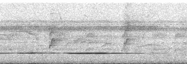Cinereous Tinamou - Paul A. Schwartz