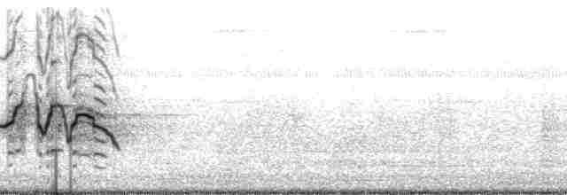 White-faced Whistling-Duck - Paul A. Schwartz