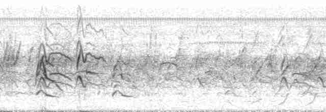 Black-bellied Whistling-Duck (autumnalis) - Paul A. Schwartz