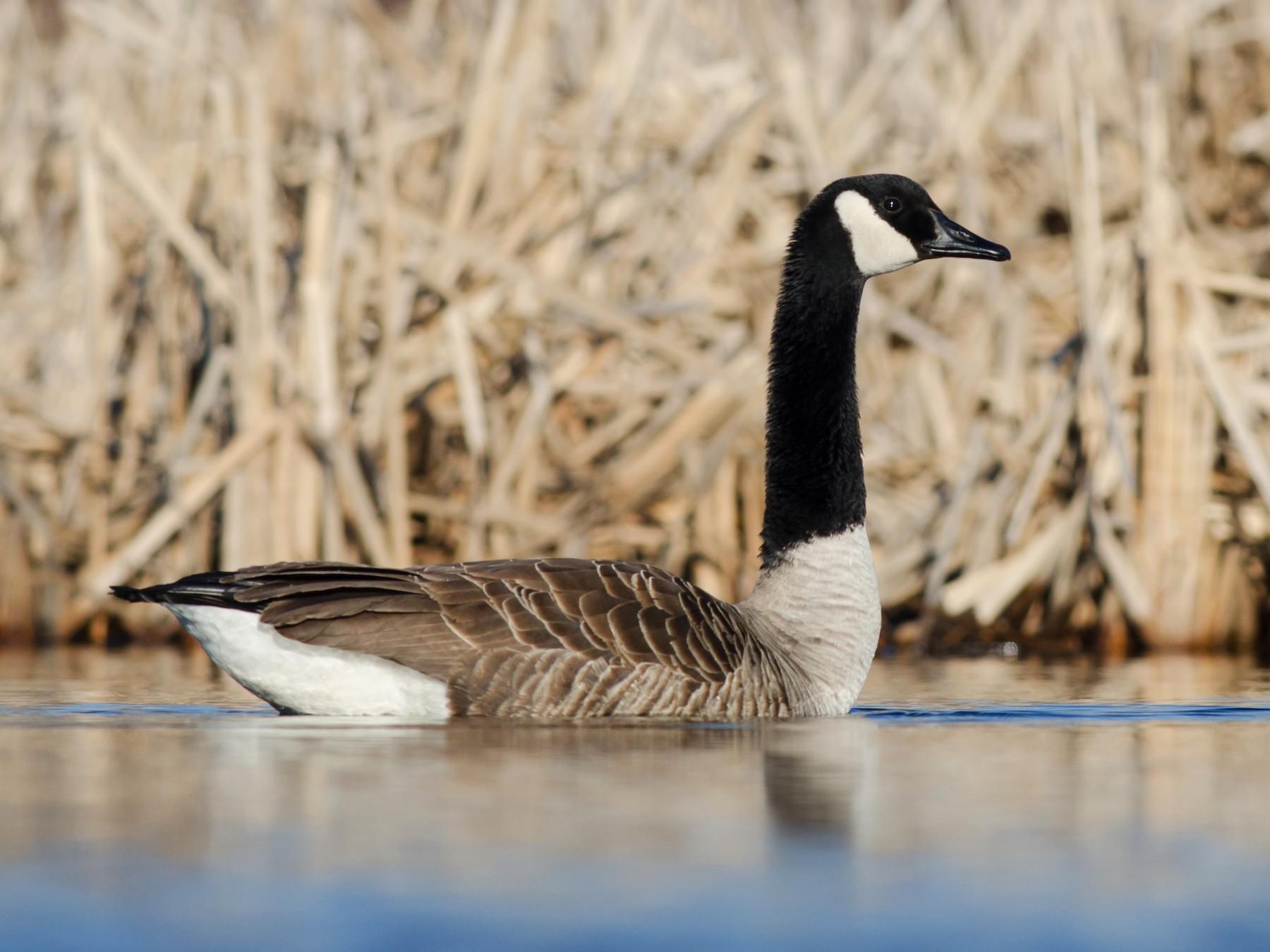 Canada Goose - Alix d'Entremont