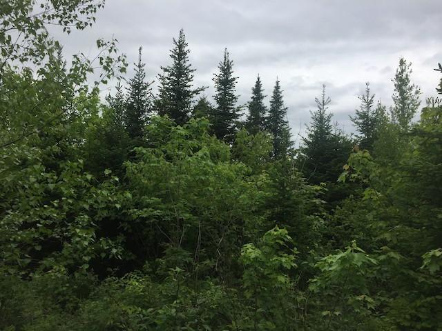 Example of Canada Warbler breeding habitat.
