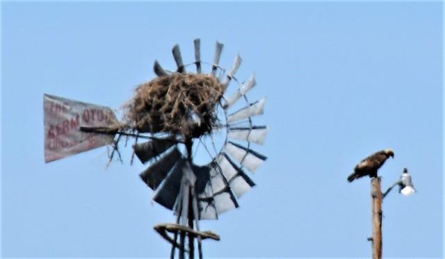 Nest on windmill.
