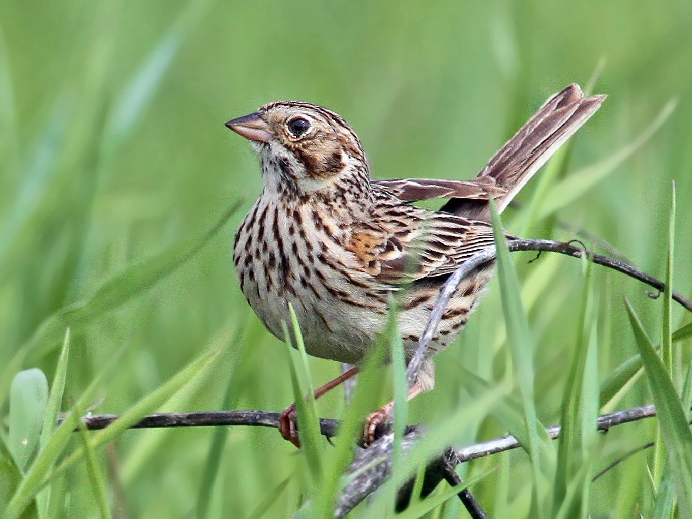 Vesper Sparrow - Ryan Schain