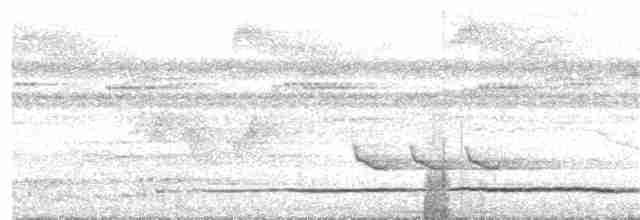 Great Tinamou - Kent Livezey