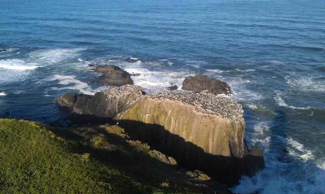 Example of habitat; Oregon, United States.