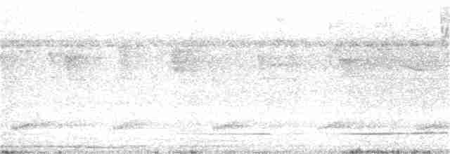 Great Tinamou - William Hull