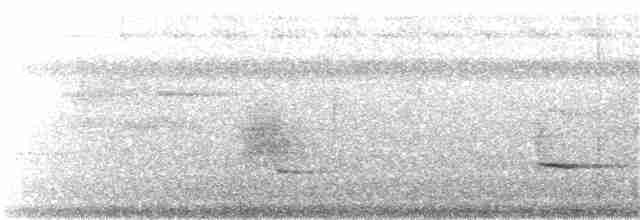 Cockerell's Fantail